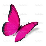 Beautiful pink butterfly flying isolated on white background